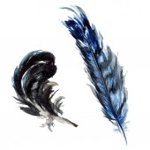 Fekete tollakkal akvarell rajz. Elemek elszigetelt illusztráció.