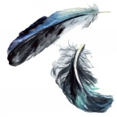 Black feathers watercolor drawing. Isolated illustration elements.