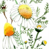 Wild spring Chamomile flowers. Watercolor illustration set. Watercolour drawing fashion aquarelle. Seamless background pattern. Fabric wallpaper print texture.