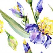 Purple yellow irises background. Hand drawn botanical flowers. Watercolor background illustration set. Watercolour drawing fashion aquarelle.