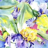 Lila, sárga íriszek háttér. Kézzel rajzolt botanikai virágok. Akvarell háttér illusztráció készlet. Akvarell rajz divat aquarelle.