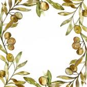 Zelené olivy akvarel pozadí obrázku nachází. Akvarel, samostatný výkresu módní aquarelle. Okraj rámečku