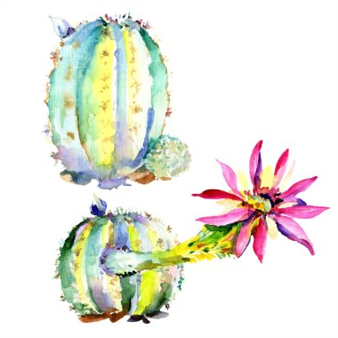 Green cacti with wildflower isolated watercolor illustration stock vector