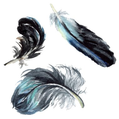 Black feathers watercolor drawing. Isolated illustration elements. stock vector