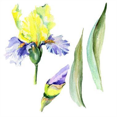 Purple yellow irises. Spring flowers isolated on white. Watercolor background illustration set. Watercolour drawing fashion aquarelle isolated. stock vector