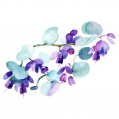 Fotografie Bouquet of purple flowers. Watercolor background illustration set. Watercolour drawing fashion aquarelle isolated. Isolated bouquet illustration element.