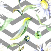 Fotografie Daisy flowers background. Watercolor background illustration set. Watercolour drawing aquarelle isolated. Seamless background pattern. Fabric wallpaper print texture.