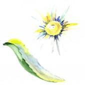 Fotografie Daisy flower. Watercolor background illustration set. Watercolour drawing fashion aquarelle isolated. Isolated daisy illustration element.