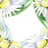 Rám s květy sedmikrásky. Sada akvarel pozadí obrázku. Akvarel výkresu módní aquarelle izolované