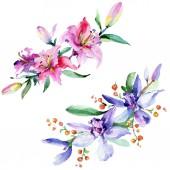 Fotografia Orchidee rosa e viola. Insieme di illustrazione dellacquerello della priorità bassa. Elemento di illustrazione di acquerello fiore bouquet