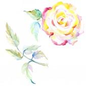 Narancssárga Rózsa. Akvarell háttér illusztráció készlet. Akvarell rajz divat aquarelle elszigetelt. Elszigetelt Rózsa ábra elem.