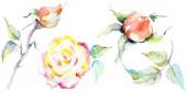 Fotografie Oranžové růže květiny. Sada akvarel pozadí obrázku. Akvarel, samostatný výkresu módní aquarelle. Izolované růže obrázek prvek