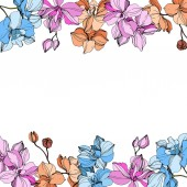 Fotografie Vektor-rosa, orange und blaue Orchideen. Wildblumen isoliert auf weiss. Gravierte Tinte Kunst. Floral Rahmenkontur