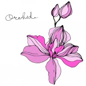 Fotografie Vector pink orchid. Wildflower isolated on white. Engraved ink art with orchid lettering