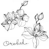 Vektor orchideje. Wildflower izolované na bílém. Černá a bílá vyryto inkoust umění s nápisem orchidej