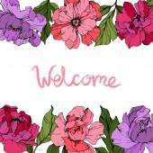 Fotografie Vektor-Pink und lila Pfingstrosen. Wildblumen isoliert auf weiss. Gravierte Tinte Kunst. Floral Rahmenkontur mit Schriftzug Willkommen