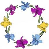 Vektor lila, kék és sárga íriszek. Vadvirágok elszigetelt fehér. Virágos keret határ másol hely