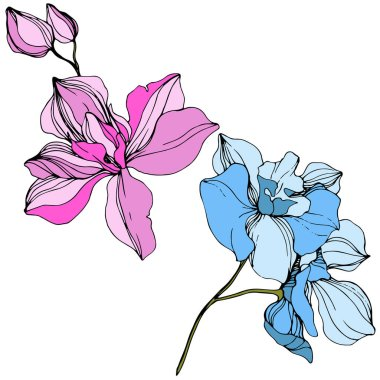 Vector pink and blue orchids. Wildflowers isolated on white. Engraved ink art clip art vector
