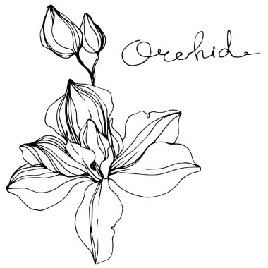 Vector Orchids. Wildflower isolated on white. Black and white engraved ink art with 'orchid' lettering