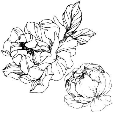 Vector Peonies. Wildflowers isolated on white. Engraved ink art. stock vector