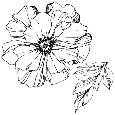 Vector Peony. Wildflower isolated on white. Black and white engraved ink art clip art vector