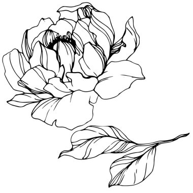 Vector Peony. Wildflower isolated on white. Black and white engraved ink art stock vector
