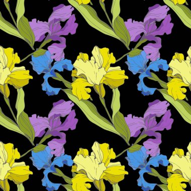Vector purple, blue and yellow Irises isolated on black. Colorful wildflowers. Engraved ink art. Seamless background pattern. Wallpaper print texture clip art vector