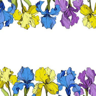 Vector Purple, yellow and blue irises. Colorful wildflowers isolated on white. Engraved ink art. Frame border with copy space clip art vector