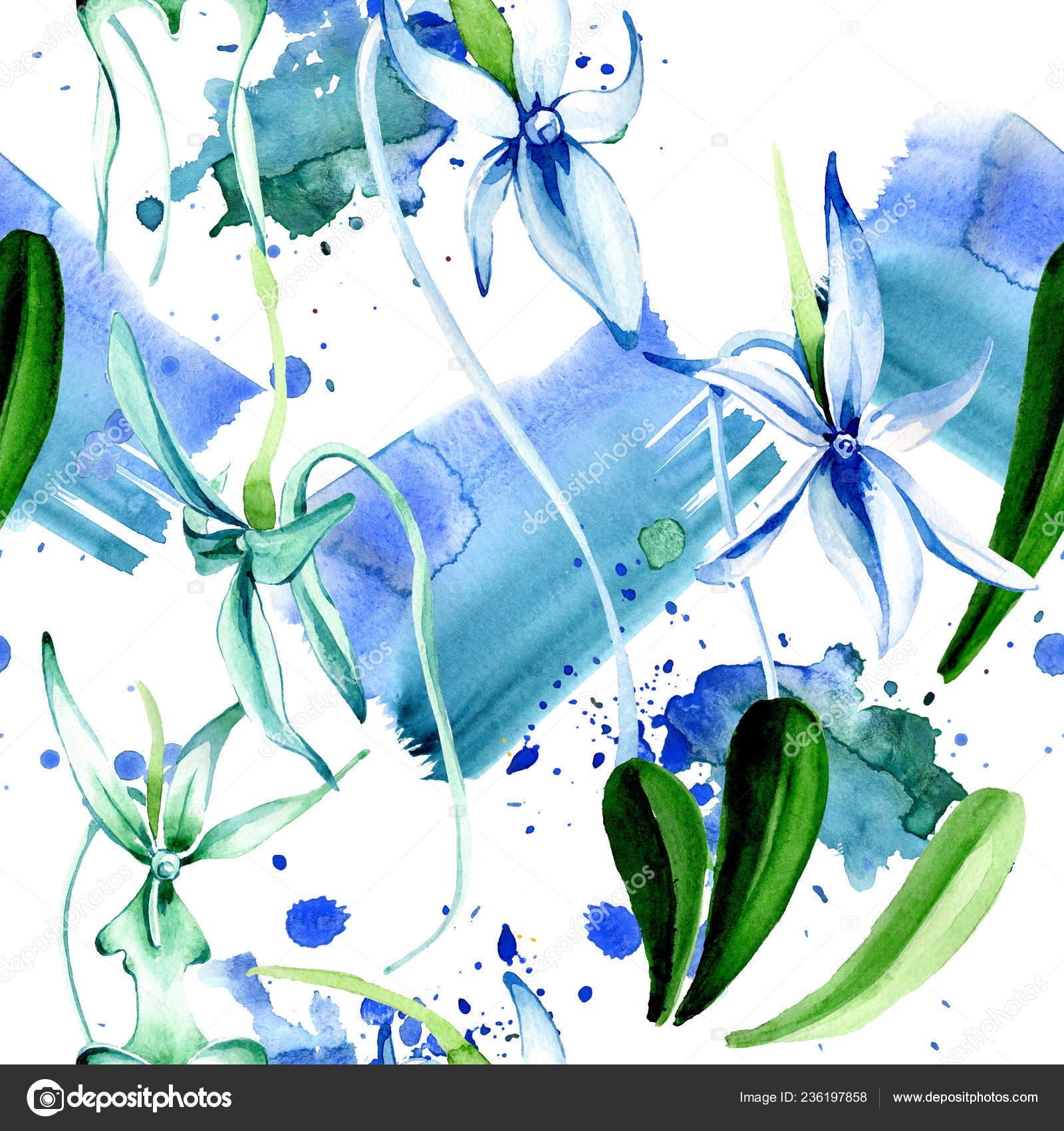 Modra Vzacne Orchideje Kvetinove Botanicke Kvetin Divoky Jarni List