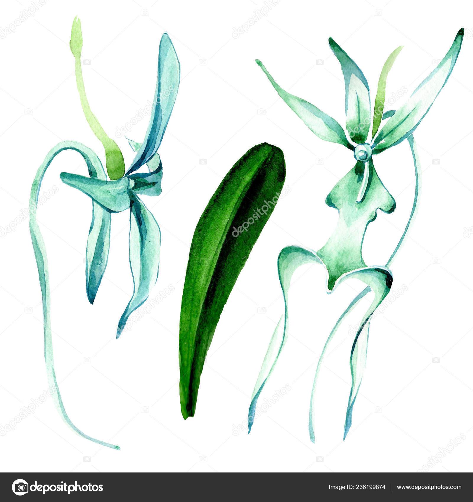 foto de Orchidée Rare Bleue Fleur Botanique Floral Wildflower Feuille ...