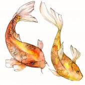 Akvarell vízi víz alatti színes trópusi hal meg. Vörös-tenger és egzotikus halak belül: Aranyhal. Az Aquarelle elemek háttér textúra. Elszigetelt goldenfish ábra elem