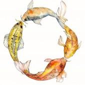 Fényképek Akvarell vízi víz alatti színes trópusi hal meg. Vörös-tenger és egzotikus halak belül: Aranyhal. Az Aquarelle elemek háttér, a textúra, a burkoló minta. Test határ Dísz tér