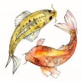 Fényképek Akvarell vízi víz alatti színes trópusi hal meg. Vörös-tenger és egzotikus halak belül: Aranyhal. Az Aquarelle elemek háttér textúra. Elszigetelt goldenfish ábra elem