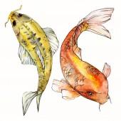 Sada akvarel vodní podvodní barevné tropické ryby. Rudé moře a exotické ryby uvnitř: zlaté rybky. Aquarelle prvky pro pozadí, textury. Izolované goldenfish ilustrace prvek