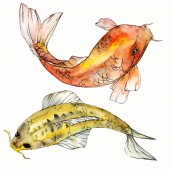 Fotografie Sada akvarel vodní podvodní barevné tropické ryby. Rudé moře a exotické ryby uvnitř: zlaté rybky. Aquarelle prvky pro pozadí, textury. Izolované goldenfish ilustrace prvek