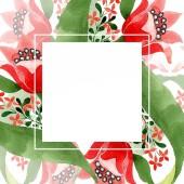 Červená květinové botanické květin. Divoký jarní listové wildflower izolován. Sada akvarel pozadí obrázku. Akvarel, samostatný výkresu módní aquarelle. Frame hranice ozdoba náměstí.