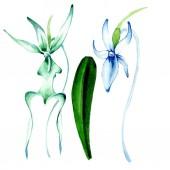 Modrá vzácné orchideje. Květinové botanické květin. Divoký jarní listové wildflower. Sada akvarel pozadí obrázku. Akvarel, samostatný výkresu módní aquarelle. Izolované orchidejí ilustrace prvek