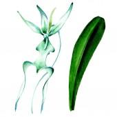 Fotografie Modrá vzácné orchideje. Květinové botanické květin. Divoký jarní listové wildflower. Sada akvarel pozadí obrázku. Akvarel, samostatný výkresu módní aquarelle. Izolované orchidejí ilustrace prvek
