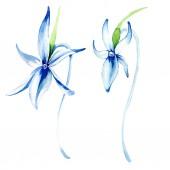 Modrá vzácné orchideje. Květinové botanické květin. Divoký jarní listové wildflower. Sada akvarel pozadí obrázku. Akvarel, samostatný výkresu módní aquarelle. Izolované orchidejí ilustrace prvek.