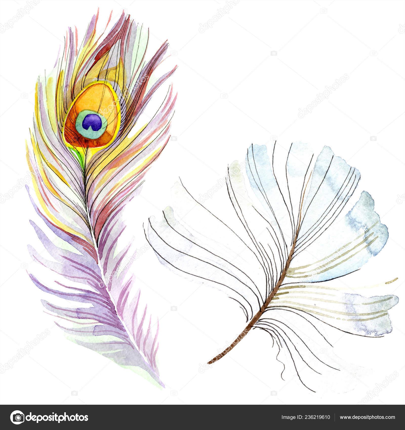 分離された翼からカラフルな鳥の羽 テクスチャの Aquarelle 水彩画背景