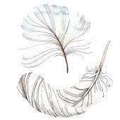 Fehér madár toll szárny elszigetelt. Az Aquarelle toll háttér, textúra. Akvarell háttér illusztráció készlet. Akvarell rajz divat aquarelle elszigetelt.