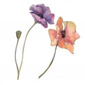 Červené a fialové máku květinové botanické květin. Divoký jarní listové izolované. Sada akvarel pozadí obrázku. Akvarel, samostatný výkresu módní aquarelle. Prvek ilustrace izolované mák.