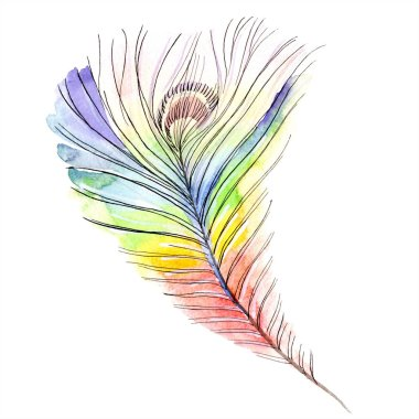 Colorful bird feather from wing isolated. Aquarelle feather for background, texture. Watercolor background illustration set. Watercolour drawing fashion aquarelle isolated. stock vector