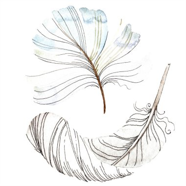 White bird feather from wing isolated. Aquarelle feather for background, texture. Watercolor background illustration set. Watercolour drawing fashion aquarelle isolated. stock vector