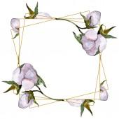 Pamut virágok-akvarell illusztráció beállítása. Test határ dísz a másol hely.