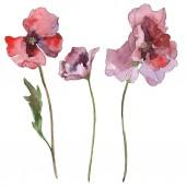 Fialový červeného máku květinové botanické květ. Divoký jarní listové izolované. Sada akvarel pozadí obrázku. Akvarel, samostatný výkresu módní aquarelle. Prvek ilustrace izolované mák.
