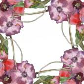 Lila piros virágos botanikai mákgubóból. Vad tavaszi levél vadvirág elszigetelt. Akvarell háttér illusztráció készlet. Akvarell rajz divat aquarelle elszigetelt. Test határ Dísz tér