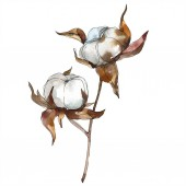 Bavlny květinové botanické květin. Sada akvarel pozadí obrázku. Akvarel, samostatný výkresu módní aquarelle. Prvek ilustrace izolované bavlny.
