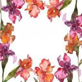 Vörös és lila virágos botanikai virág. Vad tavaszi levél vadvirág elszigetelt. Akvarell háttér illusztráció készlet. Akvarell rajz divat aquarelle elszigetelt. Test határ Dísz tér