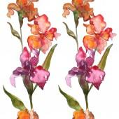 Fotografie Červené a fialové květinové botanické květin. Divoký jarní listové wildflower izolován. Sada akvarel pozadí obrázku. Akvarel, samostatný výkresu módní aquarelle. Frame hranice ozdoba náměstí